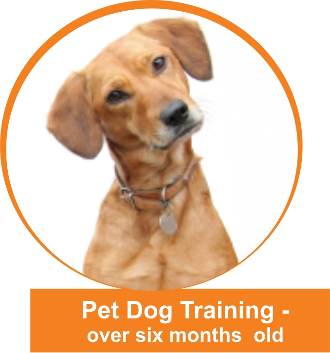 how to become a dog trainer, a professional, certified & competent ...