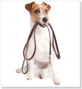 Lets Go DogNostic Pet Industry eLearning