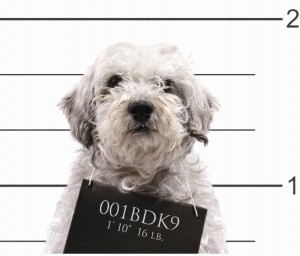 doginprison-300x256