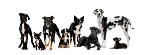 DogSmith Franchise