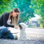 Dog Training large