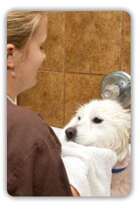DogSmith Spa Bath