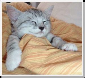 KittySmith