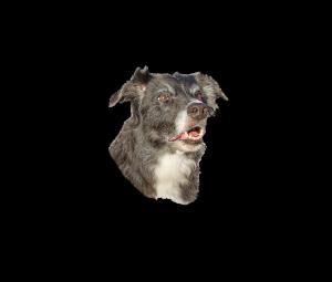 Logo Dog Willing_color