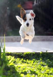 Canine Athelete