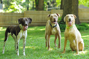 kelly-dogs