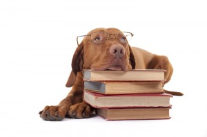 Mastiff with Books DogSmith School