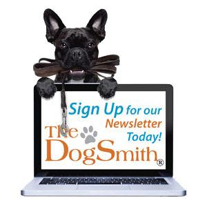 SignUpNewsletter