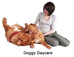 i-doggy-daycare