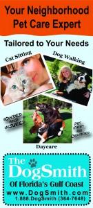 DogSmith RackCard2_Walking Sittin Cat Care (2)