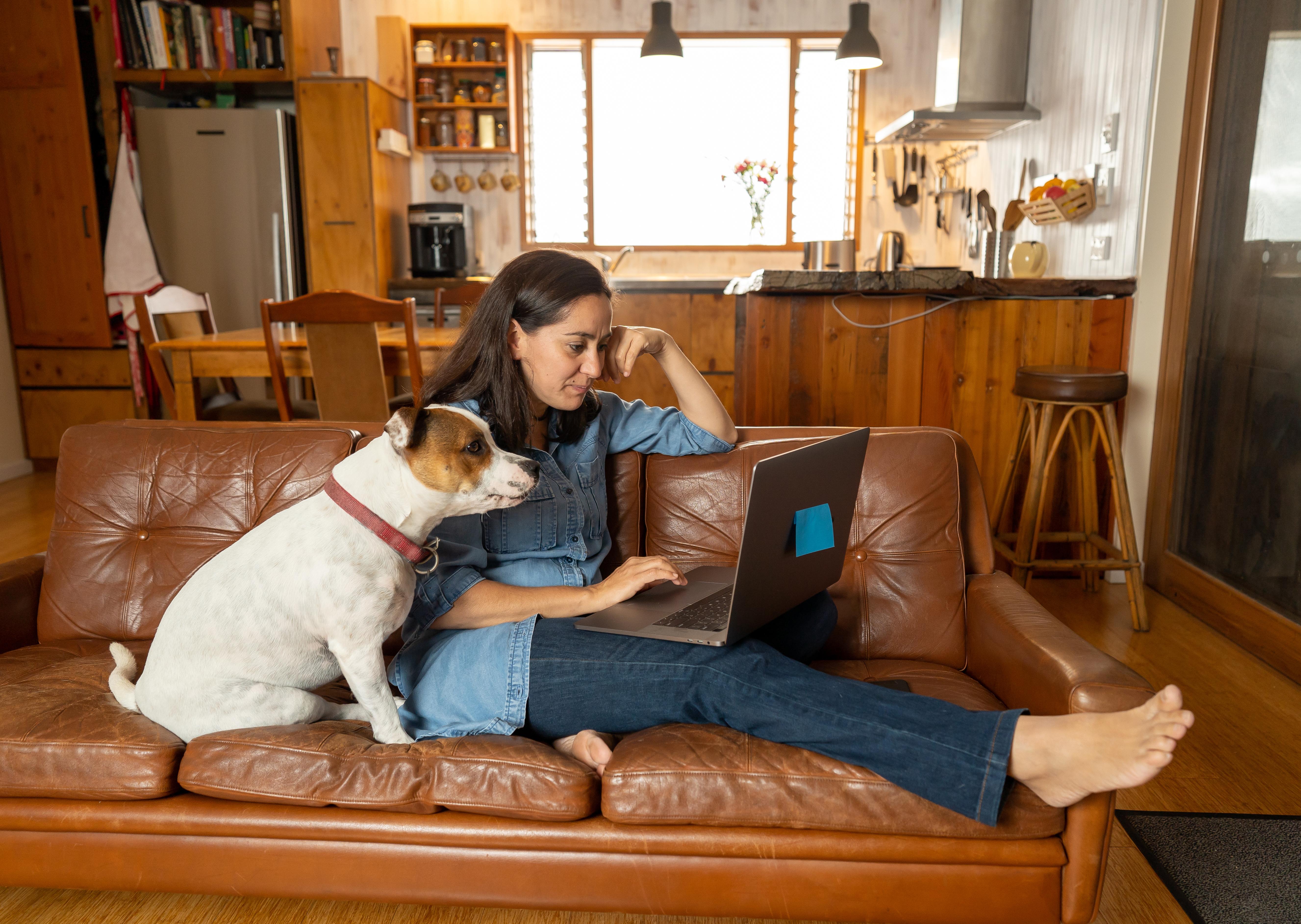 DogNostics Online Dog Training Coursese